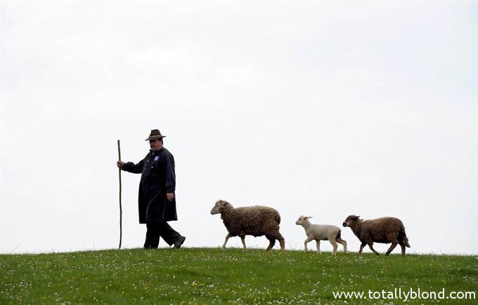 Пастух Кристиан Флорак и три барашка. Деревня Уттинг, Германия. Christof Stache  AFP - Getty Images