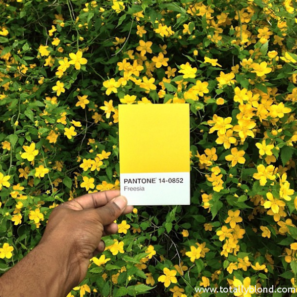 Pantone-Everyday-Life-by-Paul-Octavious-2-600x600