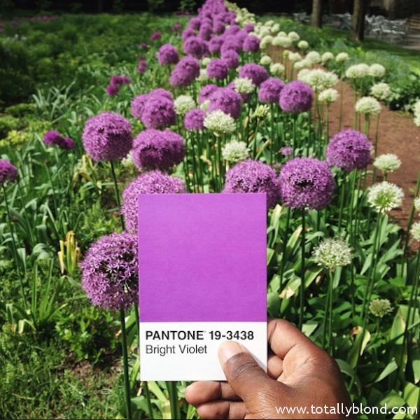 Pantone-Everyday-Life-by-Paul-Octavious-5-600x600