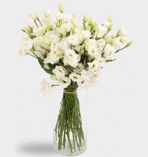 Цветы виды названия фото для букетов